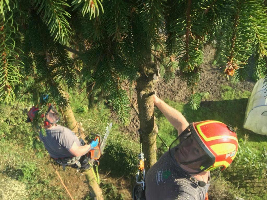 boomverzorging vanuit de boom