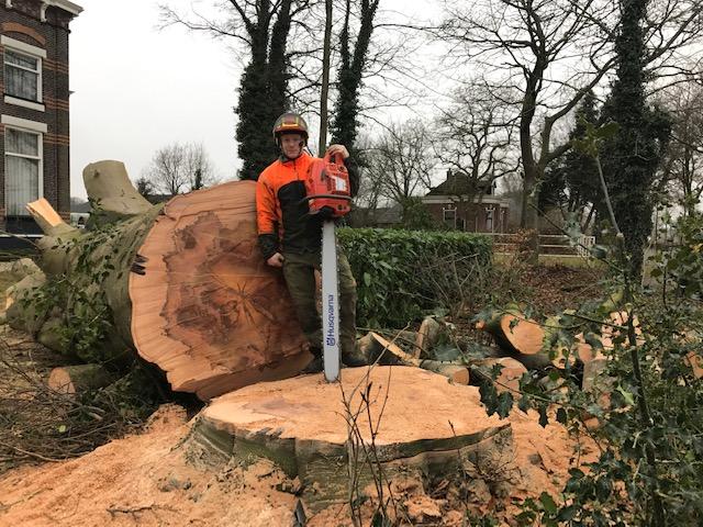 boomverzorging grote stam